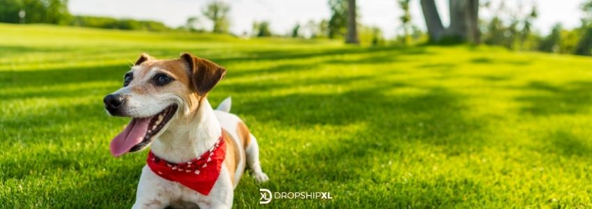Wholesale Pet Supplies, more options and trendy items