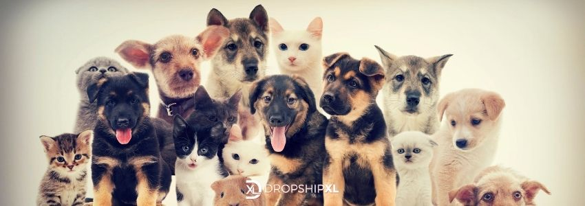 wholesale pet supplies for drop ship retailers - source hot, trendy products